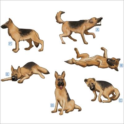 Körpersprache Bei Hunden